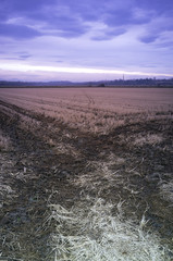 Countryside winter sunset panorama. Color image