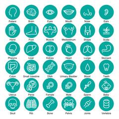 icon organ set