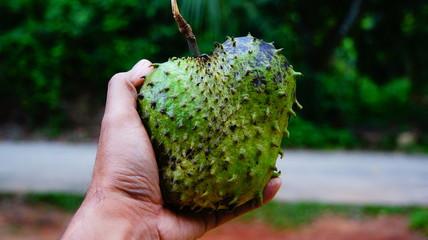 Thorny fruit