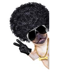 gangster dog
