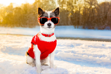 swiss dog winter