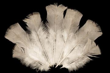 Feathers fan