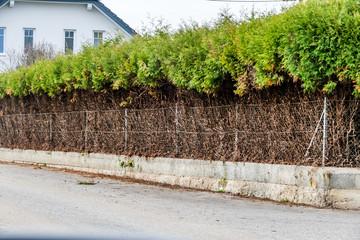 Zaun und grüne Hecke