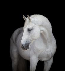 White horse on black, isolated.
