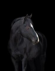 Black horse head on black background, isolated.