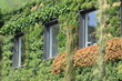 House covered with plants - 75492270