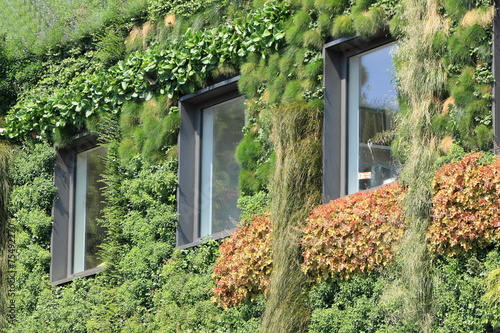 Fotobehang Tuin House covered with plants