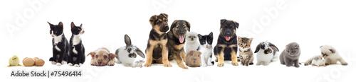 set of pets - 75496414