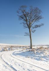 Yorkshire winter landscape