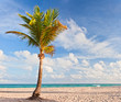 canvas print picture - Palm tree at the beach in Miami Florida USA,
