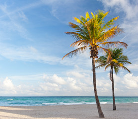 Palm trees at the beach in Miami Florida USA,