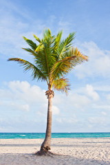 Palm tree at the beach in Miami Florida USA,
