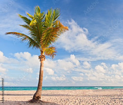 canvas print picture Palm tree at the beach in Miami Florida USA,