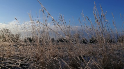 Frost on the grass and blue sky