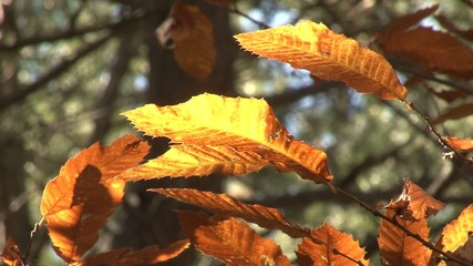 Autumn Etna