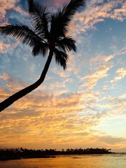 palm tree at sunset on the island of Hawaii