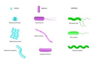 schema delle principali forme di batteri patogeni