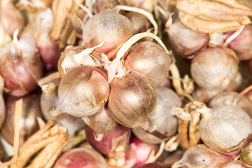 dry onions for seed