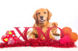 canvas print picture - Valentine's Day Dog wit XOXO sign
