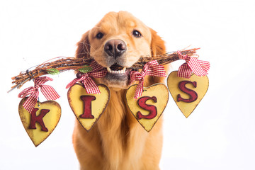 Valentine's Day Dog holding sign that says KISS