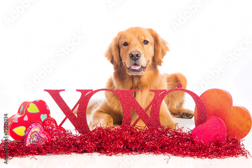 canvas print picture Valentine's Day Dog wit XOXO sign