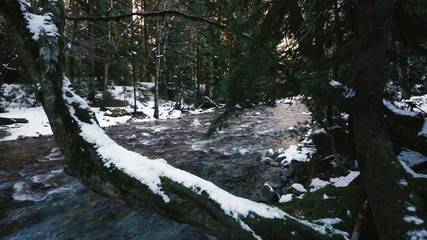 Mountain River in Snow Forest