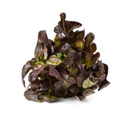red oak leaf lettuce on a white background