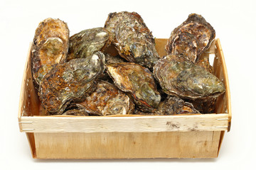 Oysters crate