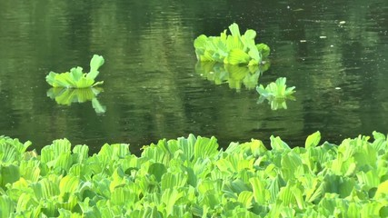 The movement of river water and water plants