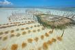 Seaweed farming, Zanzibar island, Tanzania - 75524058