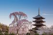 春の東寺 - 75524481