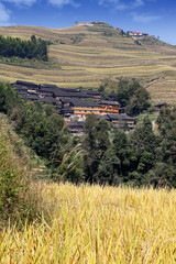 Village in the middle of rice terrace