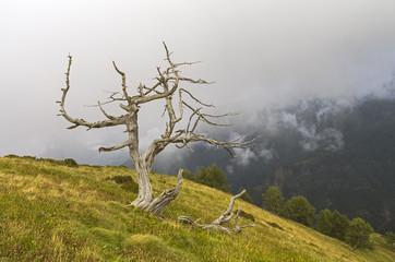 Dead tree on the hillside. Alps, Italy