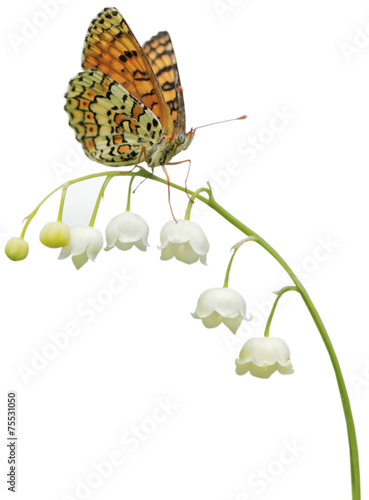 Papiers peints Papillon Lily of the Valley (Convallaria majalis) with butterfly
