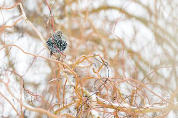 Oiseau étourneau dans l'arbre