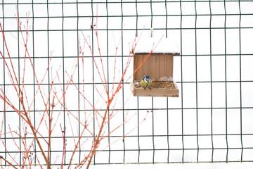 Oiseau mésange bleue sur la mangeoire
