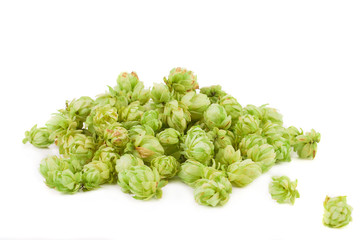 Beautiful fresh hops.