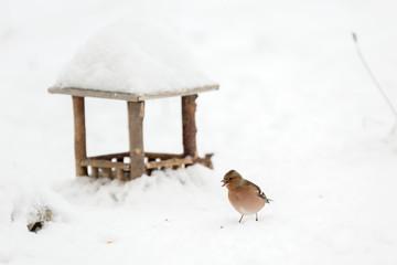 Oiseau pinson à la mangeoire dans la neige