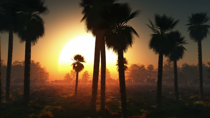 fog glowing sun and palms