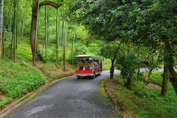 bus with tourists excursion in botanical garden Georgia Batumi