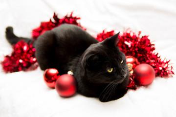Kat in kerstsfeer