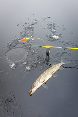 Winter pike fishing from ice
