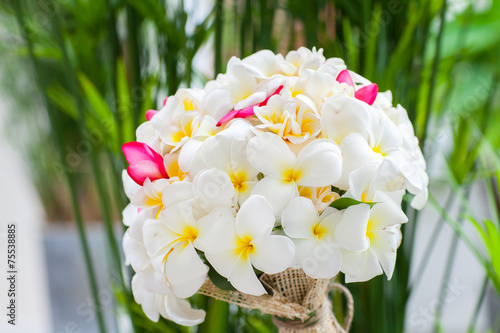 Spoed canvasdoek 2cm dik Frangipani Wedding bouquet