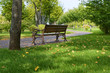 canvas print picture - Bench in a park