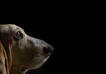 Hundenase riecht an Freifläche Spürnase