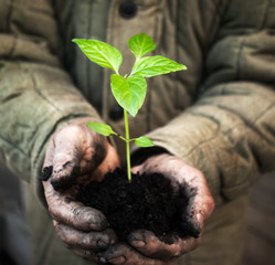 Hands holding green sapling with soil