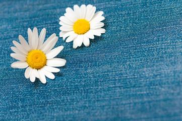 Zwei Margeritenblüten auf Jeansstoff, Grußkarte