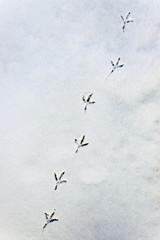 Spur eines Vogel im Schnee