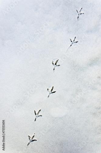 canvas print picture Spur eines Vogel im Schnee