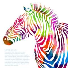 Animal illustration of watercolor zebra silhouette